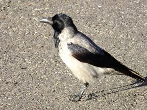 bird-114025_1280